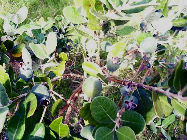 Vivero montenativo flora de uruguay for Viveros en maldonado